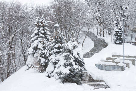 Snow-covered stairs and spruce in a park in Kiev Reklamní fotografie