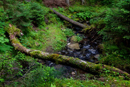Fast mountain stream in the forest