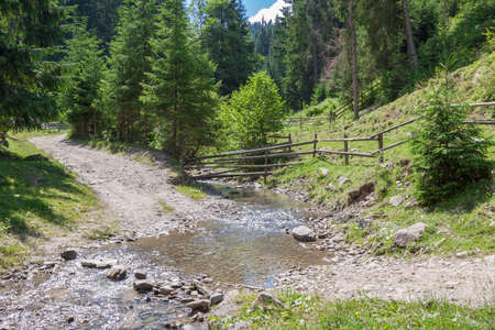Mountain road in the Carpathian forest