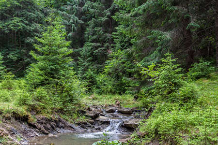 Mountain stream in the Carpathian forest