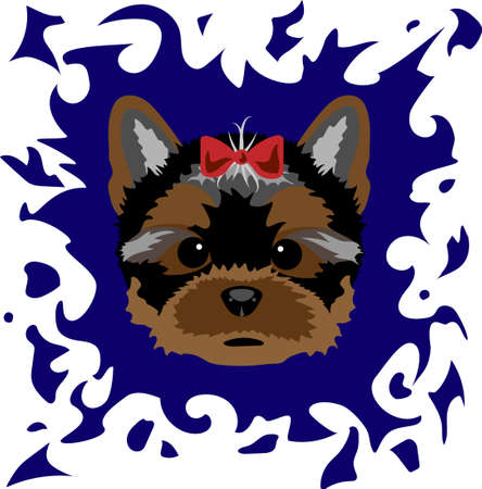 Portrait of a Yorkshire Terrier on a colored background