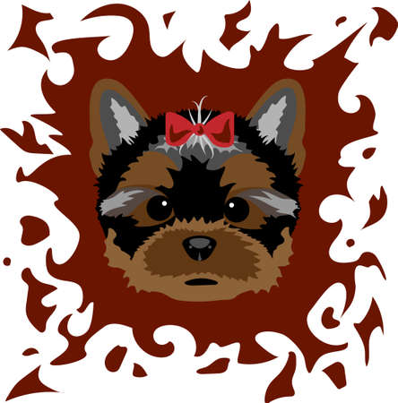 shaggy: Portrait of a Yorkshire Terrier on a colored background