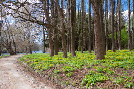 Many spring flowers in the forest of the park