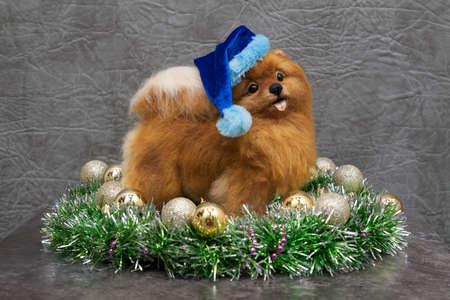 Funny yellow pomeranian dog inside christmas wreath