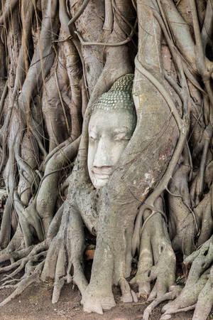 unseen: Head in the tree of Unseen Thailand