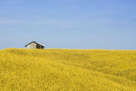 Hut in paddy field is beautiful views.