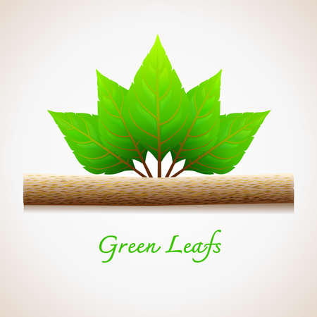 Green Leaf and wood Stock Vector - 16918858