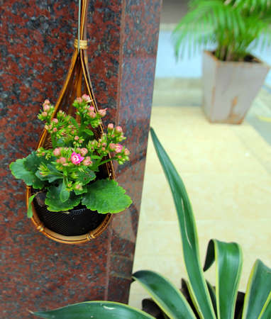 Basket of flowers Stock Photo - 17859624