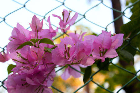 Flowers along the fence Stock Photo - 18403368