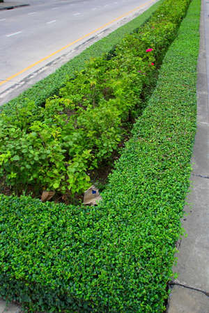 Trees planted on the pavement   photo
