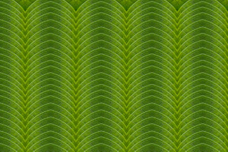 Art motifs of a green leaf  photo