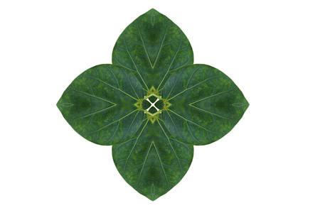 create: Create from leaf