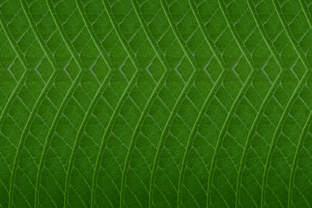 constructive: Pattern from leaf.wallpaper concept
