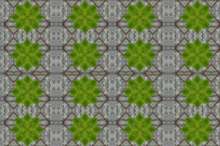 bark carving: Idea from leaf.Wallpaper concept