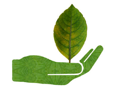 create: Create from leaf.Green leaves in the hand Stock Photo