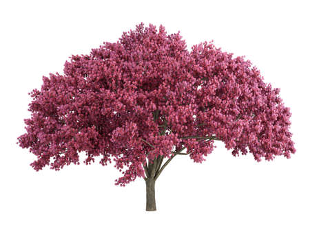 rinds: Rendered 3d isolated cherry tree