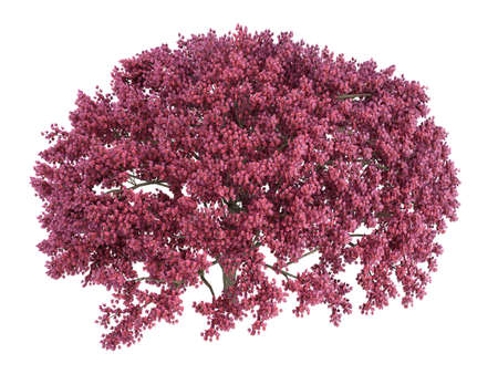 Rendered 3d isolated cherry tree Stock Photo - 5386801