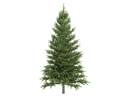 photoreal: Rendered 3d isolated spruce (Picea)