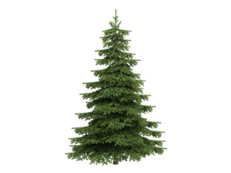 Rendered 3d isolated spruce (Picea)