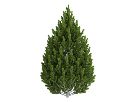photoreal: Rendered 3d isolated pine (Pinus leucodermis)