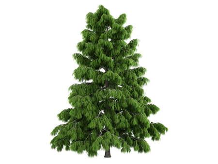 Rendered 3d isolated cedar (Cedrus deodara) photo