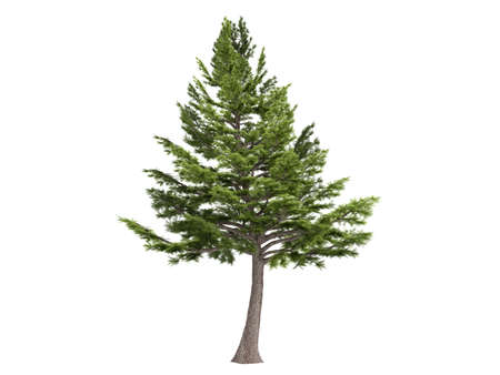 photoreal: Rendered 3d isolated cedar (Cedrus libani)