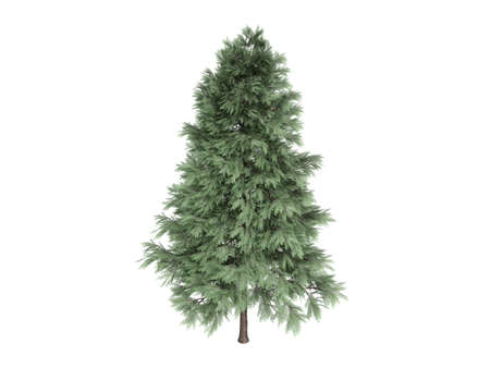 photoreal: Rendered 3d isolated pine (Pinus sylvestris)