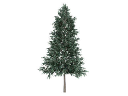photoreal: Rendered 3d isolated spruce (Picea abies)