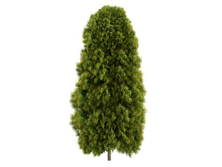photoreal: Rendered 3d isolated thuja Stock Photo