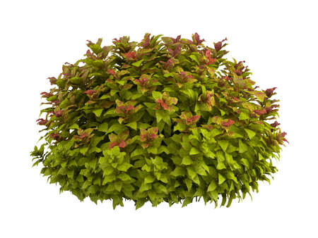 Rendered 3d isolated spiraea Stock Photo