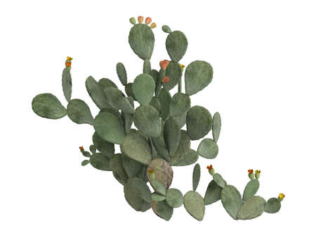 indica: Rendered 3d isolated indian fig, prickly pear (Opuntia ficus indica) Stock Photo