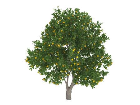 citrus  sinensis: Rendered 3d isolated sweet orange (Citrus sinensis)