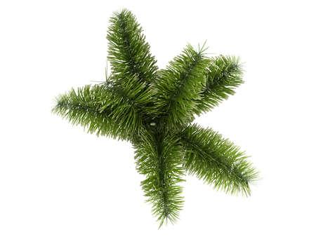 bark of palm tree: Rendered 3d isolated Foxtail Palm (Wodyetia bifurcata)