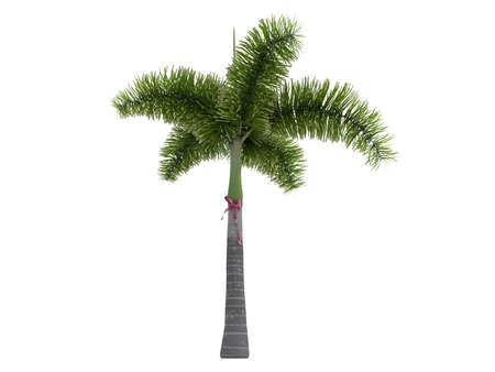 Rendered 3d isolated Foxtail Palm (Wodyetia bifurcata) Stock Photo - 9158759