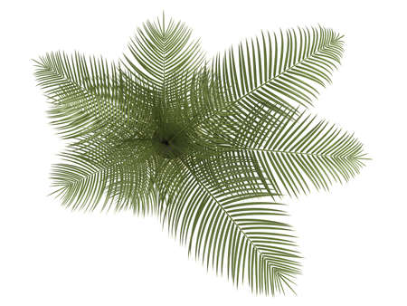 frond: Areca palm houseplant with multiple fronds growing in a small ceramic container isolated on white Stock Photo
