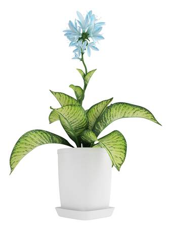 photosynthesis: Pretty blue flowering Hosta with variegated green and yellow leaves growing in a container isolated on white Stock Photo