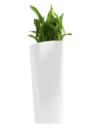 Aspidistra, a commonly cultivated foliage houseplant, growing in a triangular container isolated on white Stock Photo