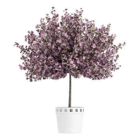 Studio shot of beautiful purple home plant isolated on white background photo