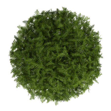 topiary: Evergreen cypress topiary tree in a container for use indoors as a houseplant or as a decorative landscaping plant in the garden isolated o white Stock Photo