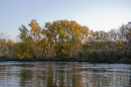 Sunset on river bank in the autumn sun beams through birch wood, canes photo