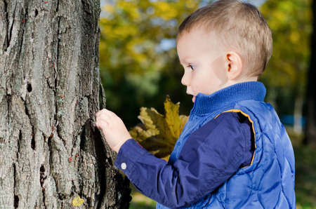 Small boy with a look of complete absorption examining the bark on a tree looking for little insects Stock Photo