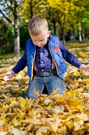 Little boy kneeling on the ground playing in fallen autumn leaves in a park Stock Photo - 16126902
