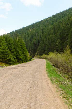 dirtroad: Wide dirt country road passing through a lush green pine-tree mountain forest