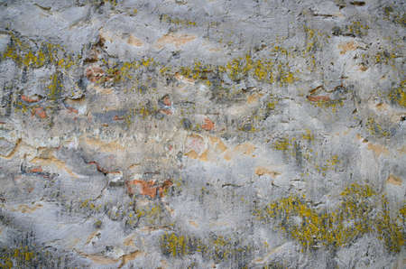Background of a grungy gray cement wall with patches of green moss Stock Photo - 20200141