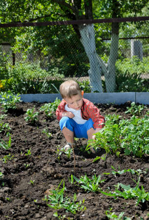 Cute little boy gardening tending to the vegetable plants as he crouches down on the ground checking on them Standard-Bild