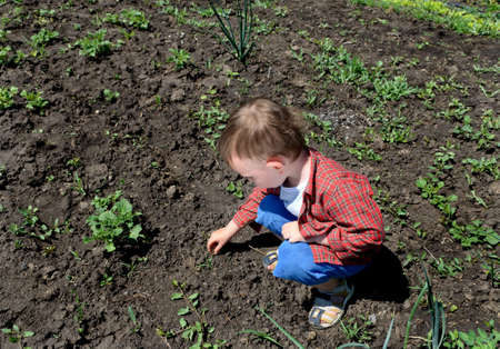 crouches: Little boy picking up something off the ground as he crouches down in the vegetable garden