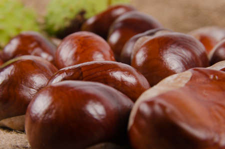 castanea sativa: A low angle view of a group of fresh whole sweet chestnuts, an edible nut or seed of Castanea sativa used in cooking Stock Photo