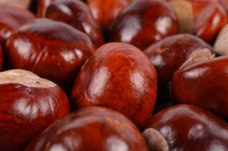 castanea sativa: Whole fresh sweet chestnuts, Castanea sativa, on a hessian sack, low angle close up view
