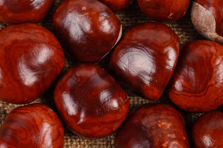 castanea sativa: Background of whole fresh autumn sweet chestnuts, the seed or nut of the Castanea sativa tree, used as an ingredient in cooking Stock Photo