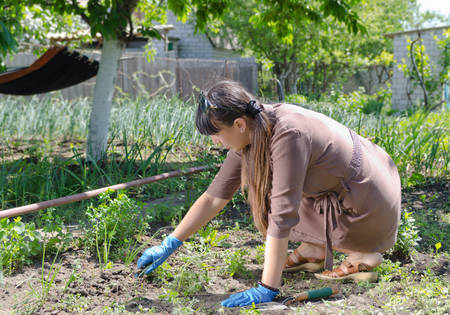 Woman weeding her vegetable garden crouched down in the summer sunshine removing weeds from amongst the vegetable plants